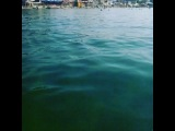 anzhela._p video