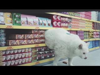 коти в супермаркеті