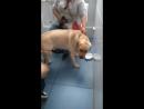 у ветеринара 2