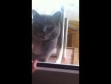 Мой кот дурак???✨