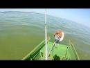 Азовское море, Ейский лиман. тарань
