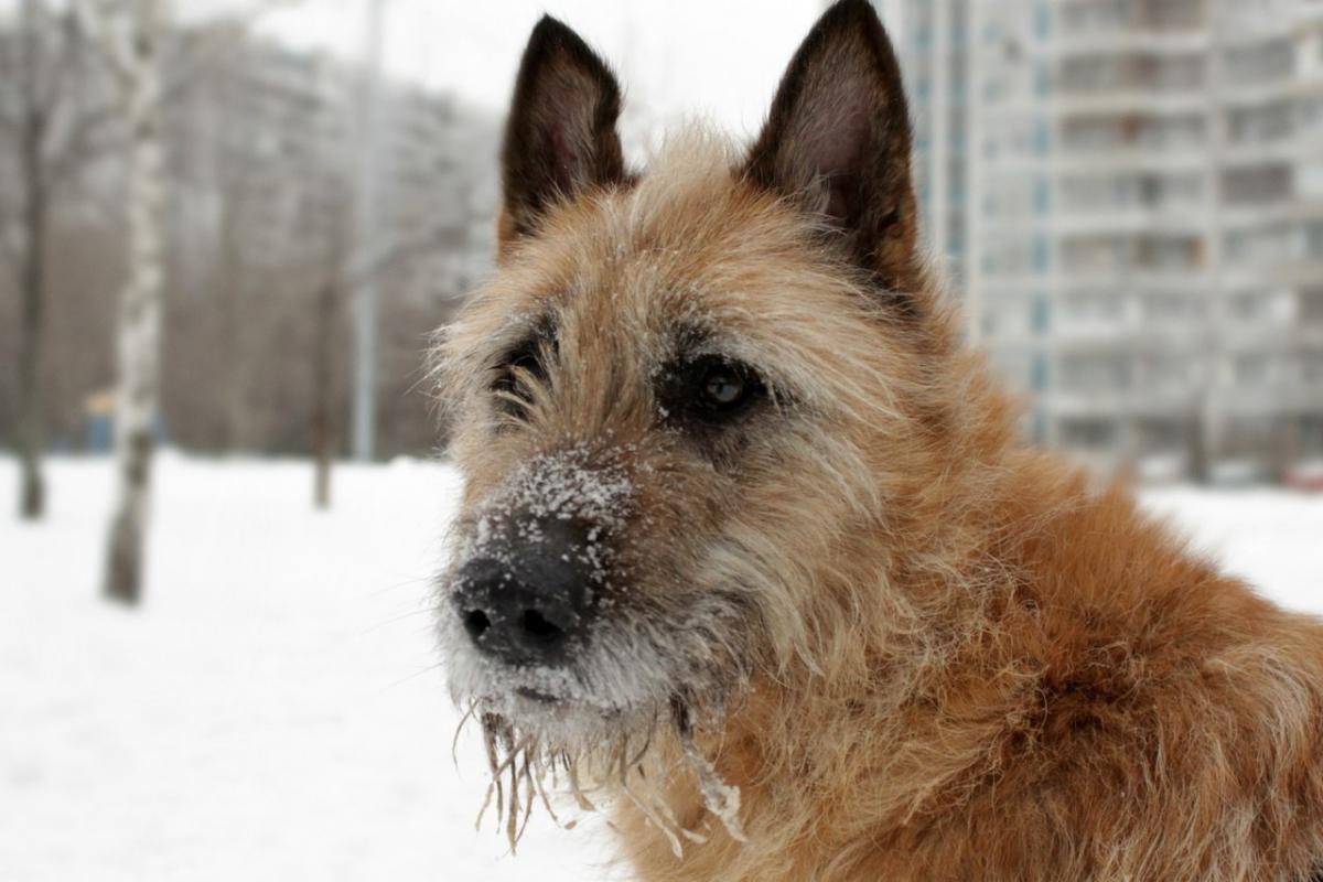 Новый дом ищет пес Цитрус из приюта «Искра»