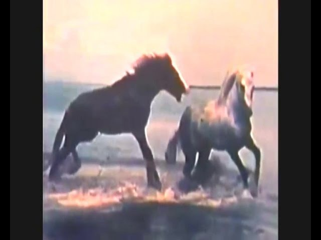 Synths Versus Me - Goodbye Horses
