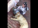 Дочки Ксении Бородиной Тея и Маруся играют во дворе с собакой
