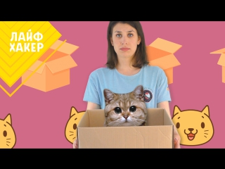 Кошки не просто так любят коробки. Мы знаем, почему