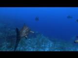 Walking With Dinosaurs - Ep 3  Cruel Sea