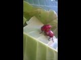 Трах жуков