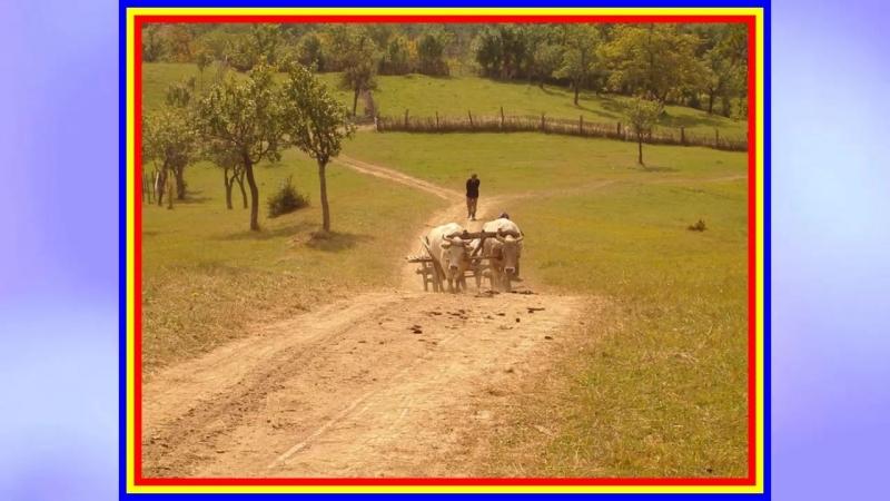 Veta Biris - Cine mana boii bine