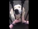 ОСТОРОЖНО!!! Во дворе очень злая собака!!!