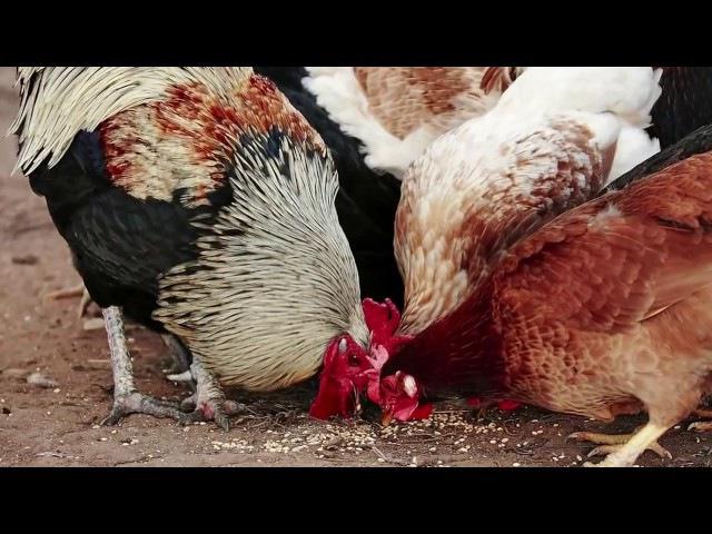 Курица или яйцо Как наука подтверждает Библию!