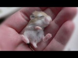 CUTEST Baby ANIMALS Ever - Adorable Little Pets Videos Vines Compilation 2017