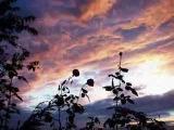 L'assenza (Fiorella Mannoia)