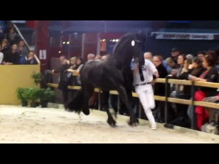 Beart 411/Stallion show Leeuwarden 2012
