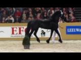 Uldrik 457/Stallion show Leeuwarden 2012
