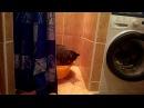 Кот купается в тазике - часть 1Cat bathing after baby - part 1