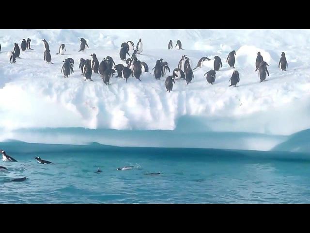 Jump penguins who love moms