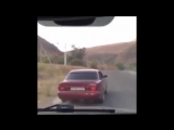 Барана затащили в машину - YouTube