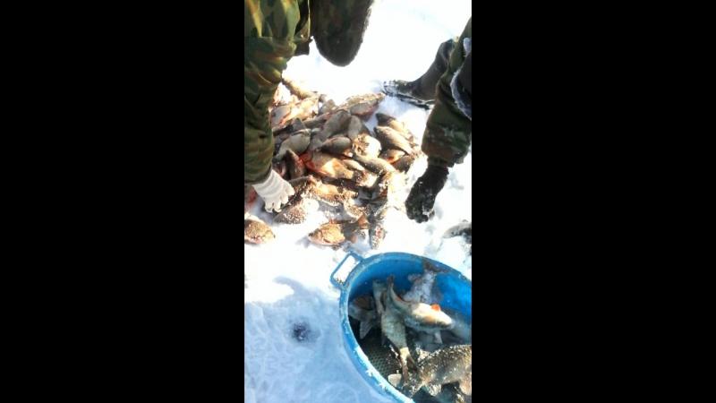 челбасская рыбалка
