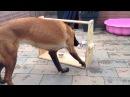 Гениальная игрушка своими руками для гиперактивных собак которые очень любят покушать
