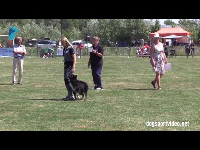 Finals - Valentina Balli Mind the Dog Lycan