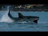 Олимпийский чемпион Фелпс уступил в заплыве большой белой акуле