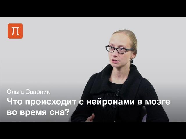 Сварник Ольга - Сон и память cdfhybr jkmuf - cjy b gfvznm
