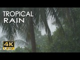 4K Tropical Rain &amp Relaxing Nature Sounds - Ultra HD Nature Video - Sleep Relax Study Meditate