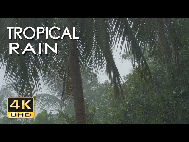 4K Tropical Rain Relaxing Nature Sounds - Ultra HD Nature Video - Sleep/ Relax/ Study/ Meditate