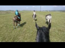 Horse riding in the fields and forests/ Конная прогулка по полям и лесам