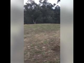 Глупый кенгуру