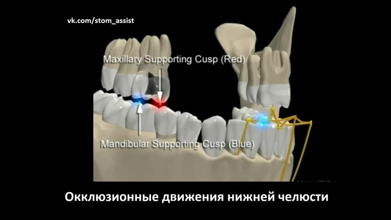 Oclusion Dinamica Mandibular.mov. Окклюзионные движения нижней челюсти. Гнатология.