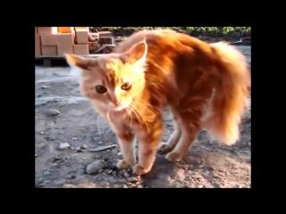 Смешные кошки приколы про кошек и котов 2017 #17 (Боевые котята и милые котики)
