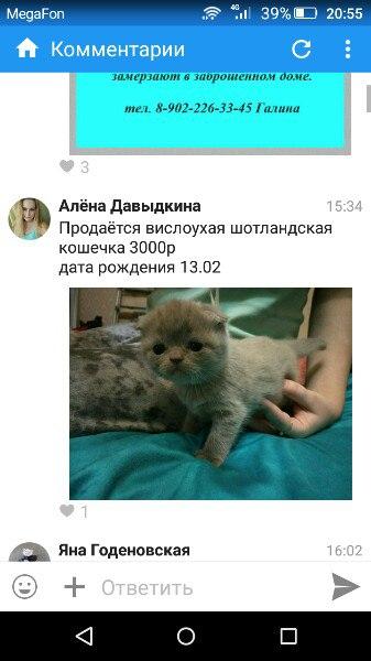 [id37184873 Алена], поставщик очередных псевдопородистых котят. И опят