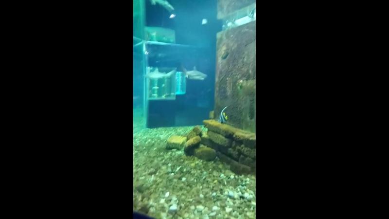 Джубга. Океанариум. Акула! Dzhubga. Aquarium. Shark