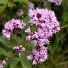 Лечебные травы | Чайные смеси | Экокосметика