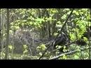 Спецназ - 08. Засада у Волчьей ямы