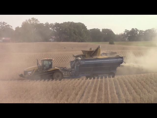 Lexion Combines Harvesting Soybeans