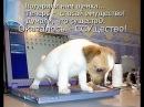 безногая  милая собачка описалась от ужаса