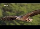 Орел - Царь неба! Интересные факты (серия №6)
