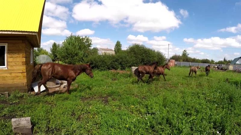 Ваня коневод.