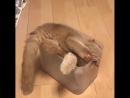 Жидкий коте