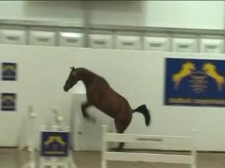 Конь-мотылек