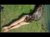 World's Giant Snake Anaconda found in Amazon Rain forest 🌟 Python Snake Attacks - Giant Anaconda