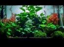 Planted Shrimp Aquarium