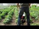 Окучивание картошкиМотоблок weima 1050(клон фаворита