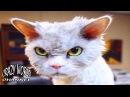 ЗЛЫЕ И СЕРДИТЫЕ КОТЫ И КОШКИ 2017 ПЛЮЮЩИЕСЯ КОТЫ И КОШКИ 2017 ANGRY CATS 2017 44