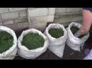 Выращивание картофеля в мешках эксперимент