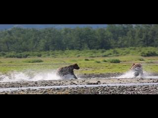 Wild ALASKA [ Travel Trip Путешествия Туризм Кругосветка Вокруг света Аляска ]