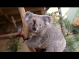 Butterfly_takes_over_Koala_Joeys_Photoshoot_and_owns_it_like_a_BOSS!