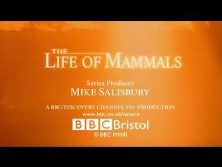 BBC Жизнь млекопитающих 09_Social Climbers